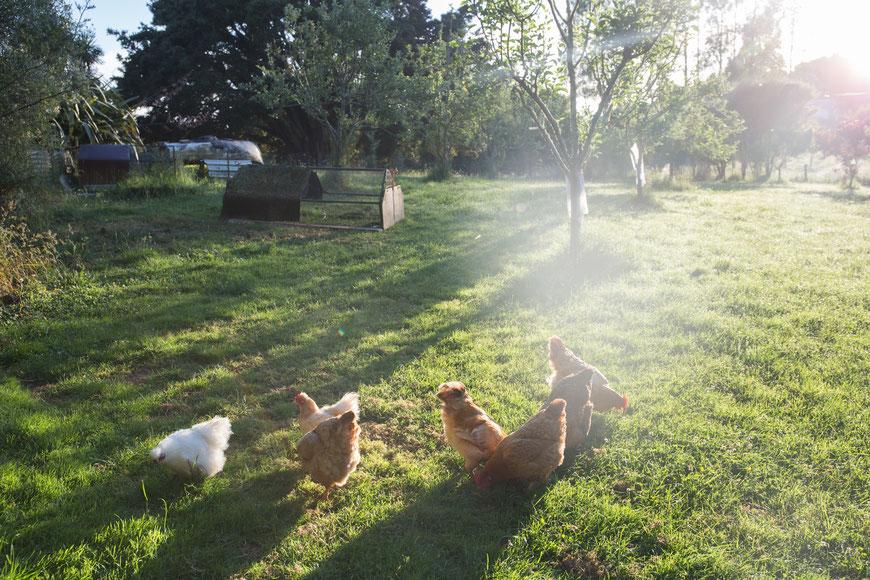 Das Füttern der Hühner hat zu meiinen Lieblingsaufgaben gehört.
