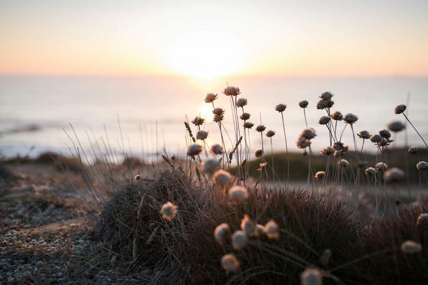 Mein Lieblingsfoto: Entstanden ist es an unserem letzten Abend. Nachdem wir die Surfbretter auf und die Neoprenanzüge im Busschen verstaut haben, hat uns André hierhergebracht, damit wir den Sonnenuntergang sehen können. (c) Salomé  Weber