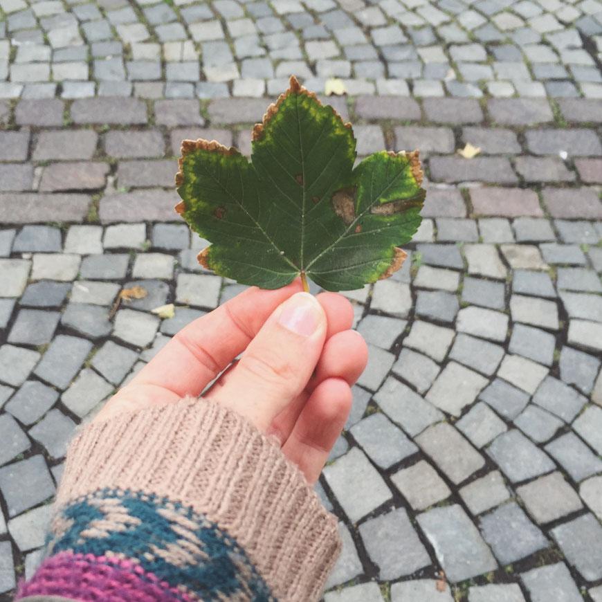 Der Herbst ist da! (c) Salomé Weber