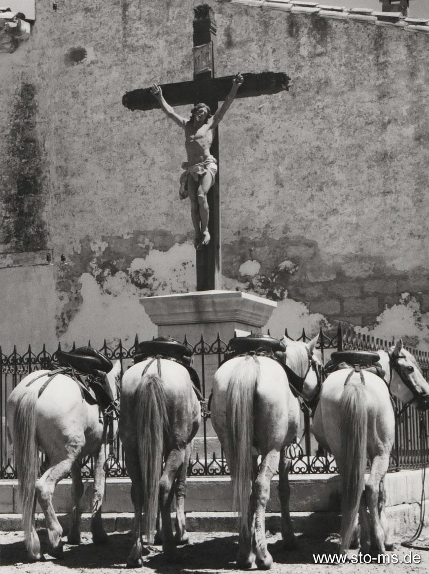 Betende Pferde - Frankreich 1963