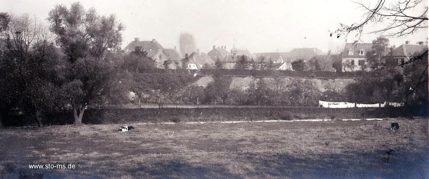 Trocknende Wäsche und weidende Kühe auf der Westerholtschen Wiese 1912