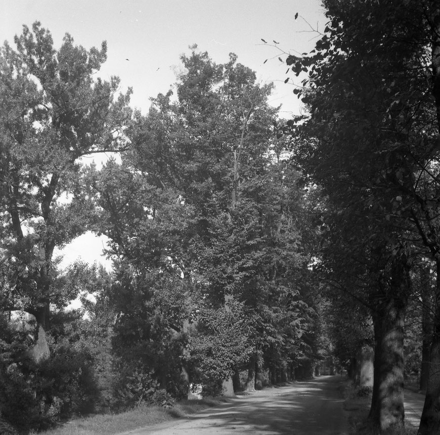 Promenade 1950er Jahre