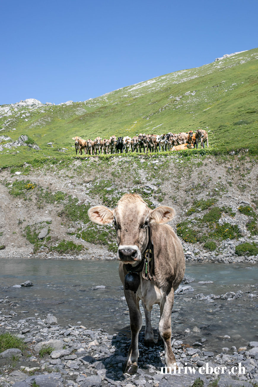 Wasserweg, Trutg dil Flem, Familien, Wanderung, wandern mit Kindern, Flims, Laax, Travelblog, Schweiz, Familienblog, Wanderweg, Fotowettbewerb ifolor