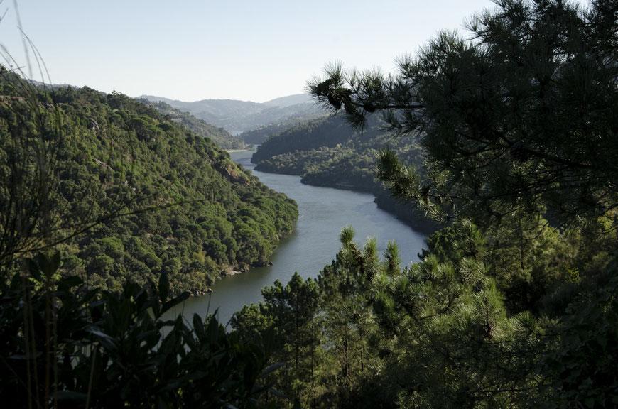 Wild Douro