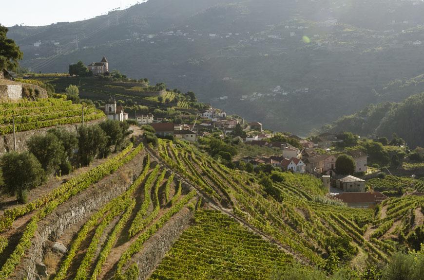 Port Wine 2