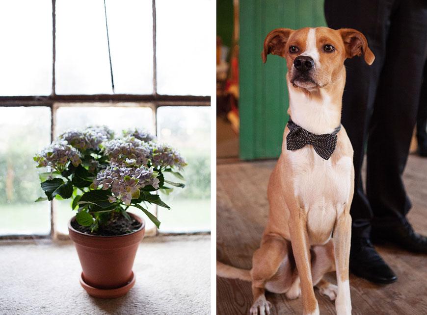 schicker und modischer Hund mit Fliege bei Hochzeit in Schloss Spreewiese bei Bautzen nahe Dresden
