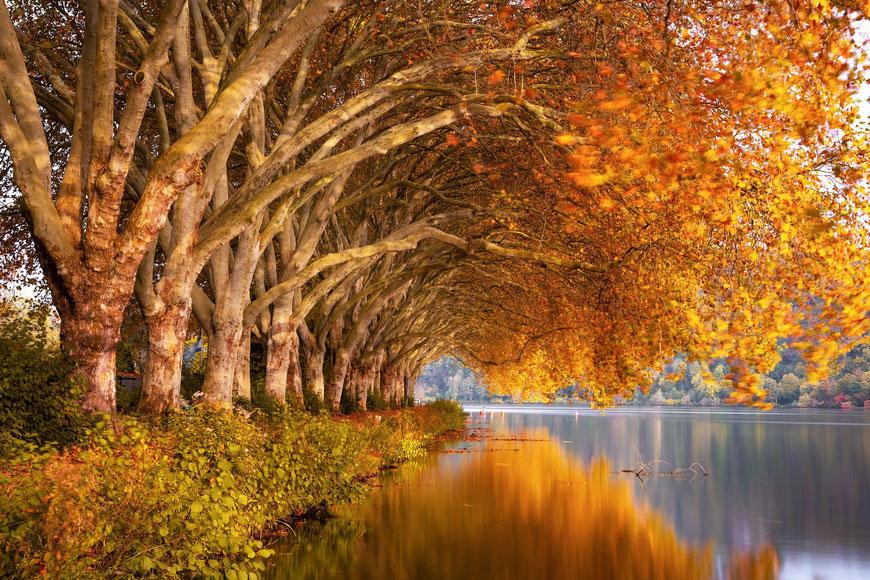 Schöne warme Herbstfarben durch manuellen Weissabgleich