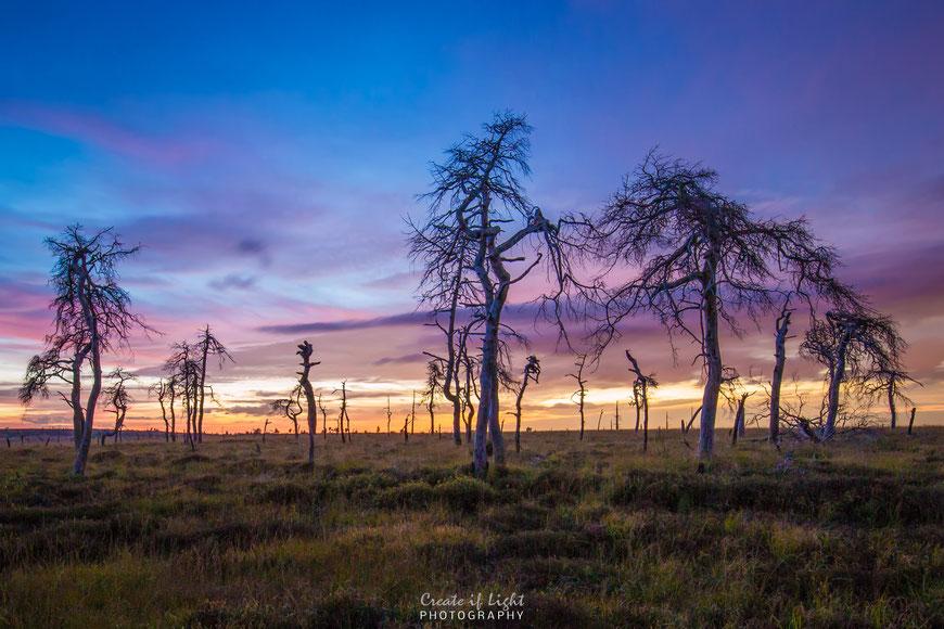Unwirkliche Moorlandschaft mit Geisterbäumen