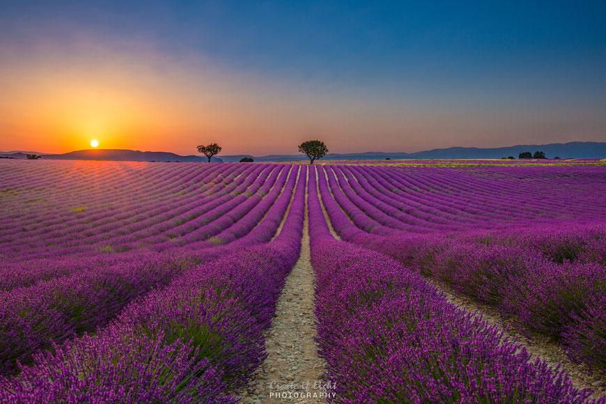 Sonnenuntergang in den Lavendelfeldern von Valensole