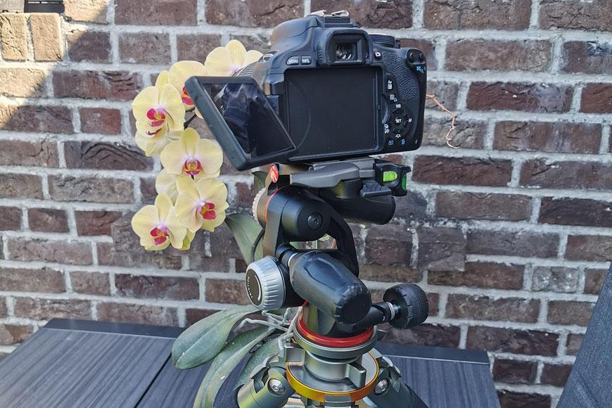 Makrofoto mit der Canon 600D (APS-C Kamera) mit Kit-Objektiv 18-55mm