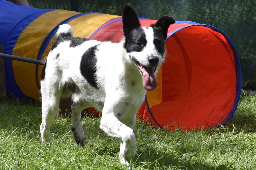 Junghundeerziehung in der Hundeschule GOOD DOGS