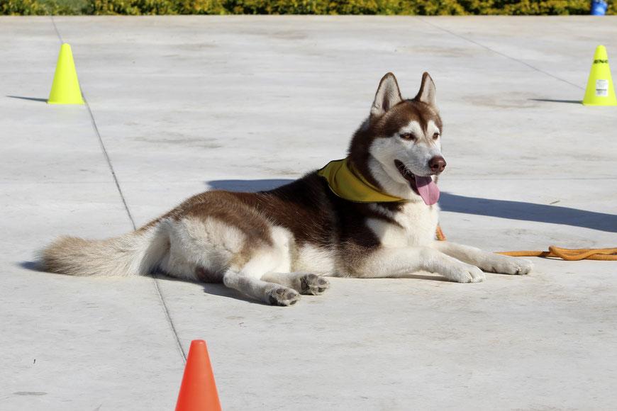 Repeat - der neue Kurs in der Hundeschule GOOD DOGS, Offenbach, Dietzenbach, Rodgau, Heusenstamm