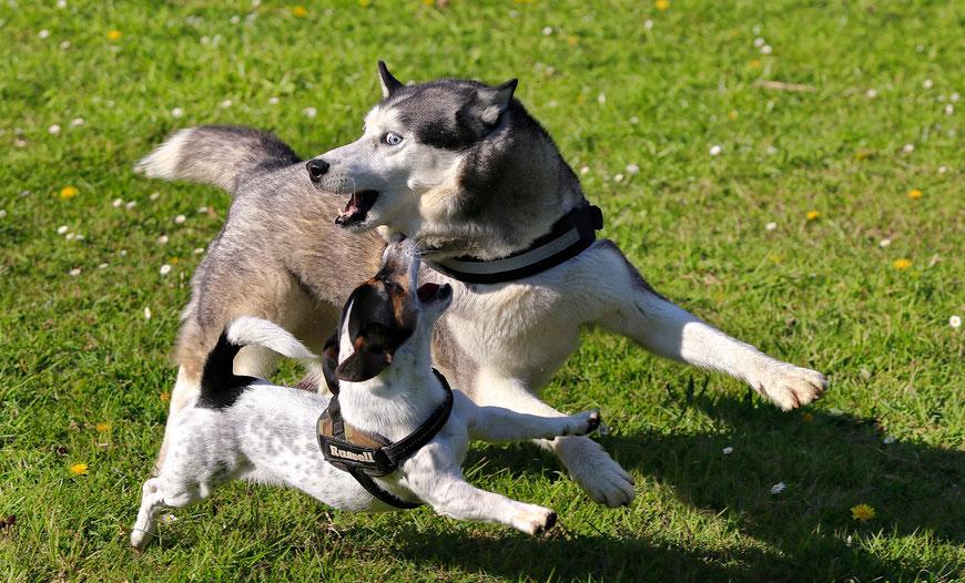 Spiel & Kommunikation in der Hundeschule GOOD DOGS, Offenbach, Dietzenbach, Heusenstamm, Rodgau, Neu-Isenburg, Obertshausen