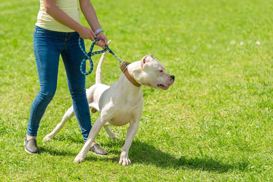 Hunde zeigen oftmals nicht das erwünschte Verhalten in Begegnungen mit anderen Hunden.
