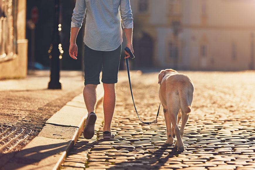 Erziehung im Alltag in der Hundeschule GOOD DOGS