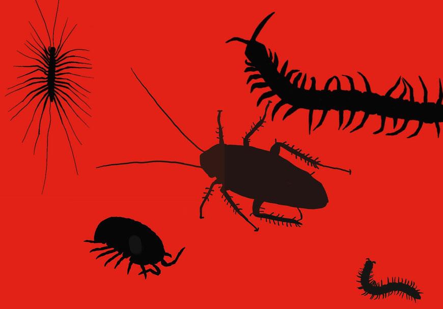 ヤスデ、ムカデ、ゴキブリ、ダンゴムシ、ゲジ