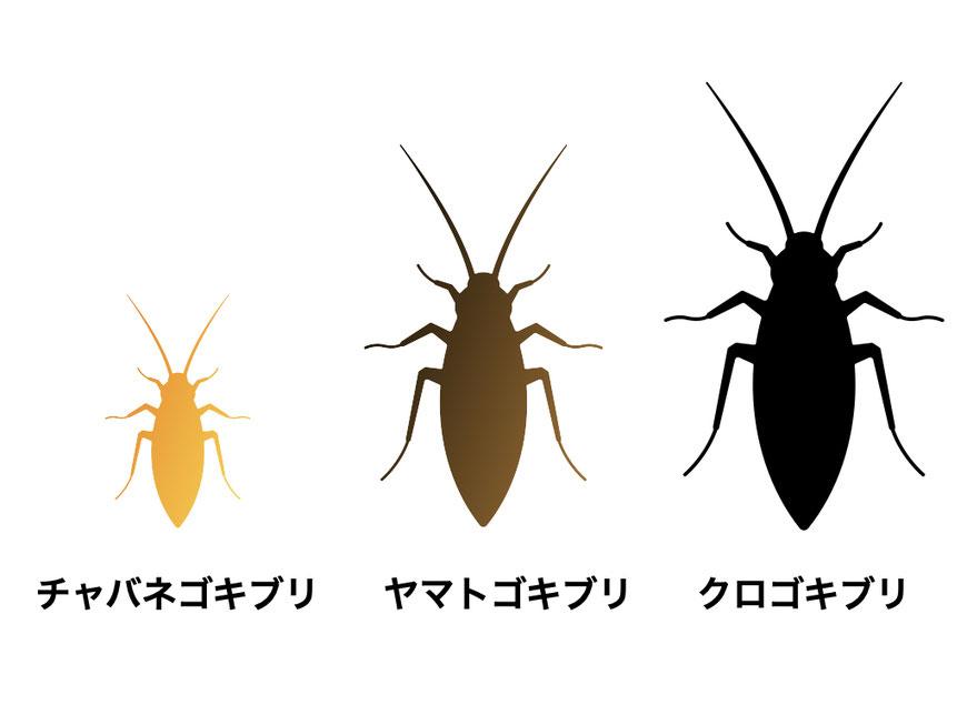 小さい順にチャバネゴキブリ、ヤマトゴキブリ、クロゴキブリ