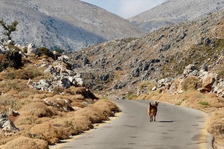 дикие козы, горы Перисинаки Крит