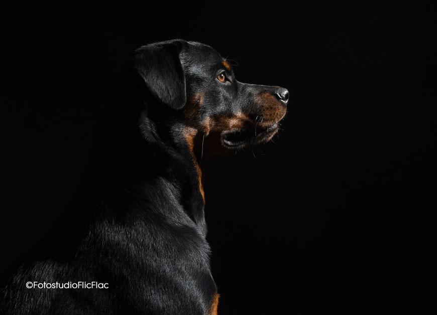 Hundefoto mit Frauchen gibt dem Hund einen Kuss