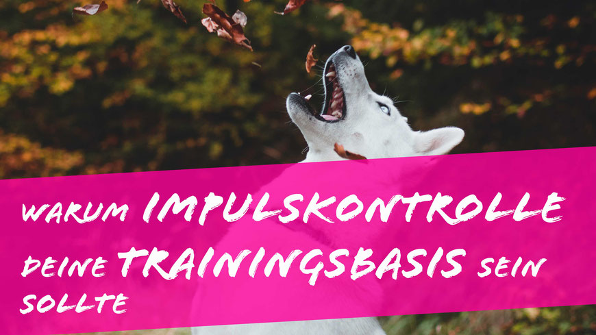 Impulskontrolle beim Hund