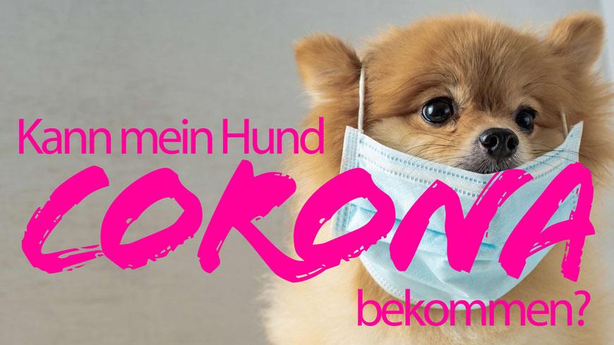 Hunde mit Coronavirus, Hund mit Atemschutzmaske,