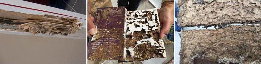 ©Sentri Tech, dégâts des termites