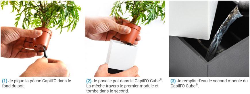 ©Capill'O Concepts, Un kit végétal avec un système d'irrigation autonome