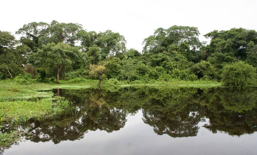jungle bolivien river