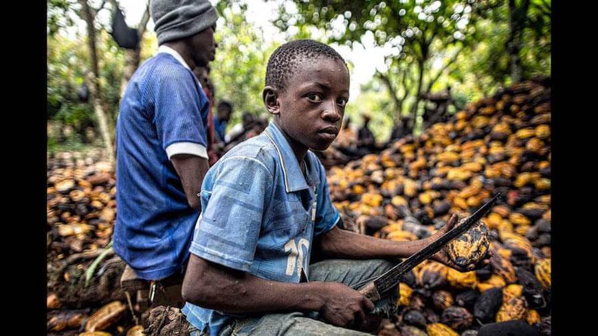 boys machete cacao pods