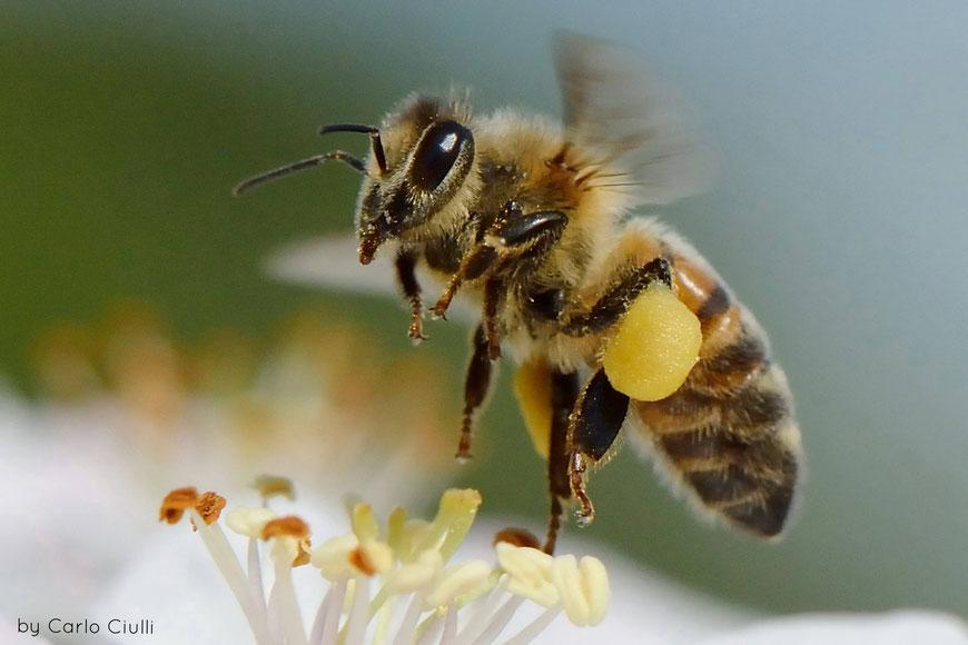 APIWELT Bienen und Imkereibedarf