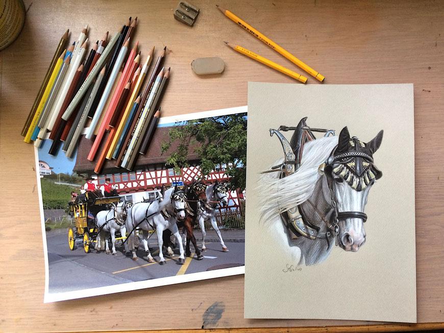 zeichnung farbstift bleistift gezeichnet pferd hund katze pony esel muli schimmel charakter natürlich