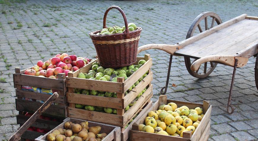 Äpfel, Birnen, Alte Sorten, Streuobst