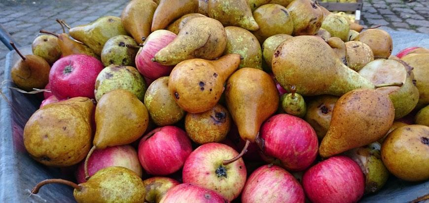 Äpfel, Birnen, Flaschenbirne, Prinzessin Marianne, Saft, Saftmischung, Streuobstsaft