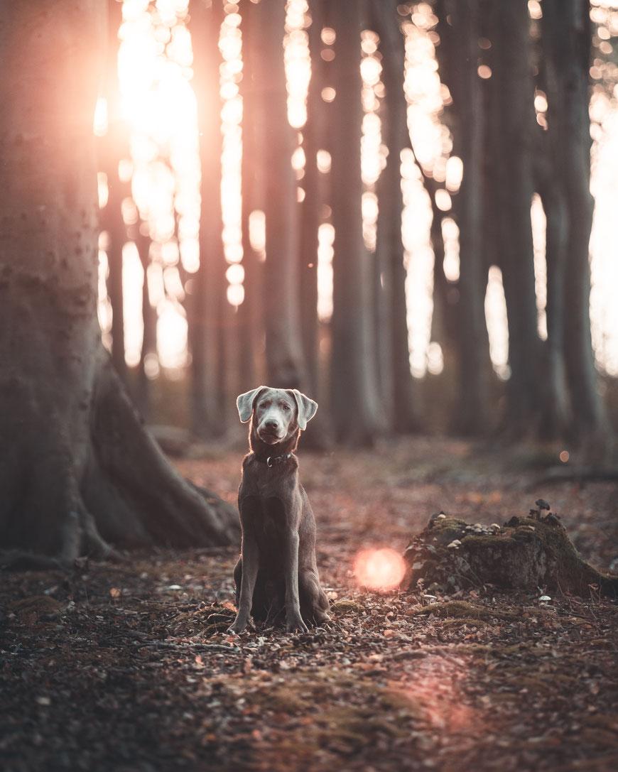Hundeportrait im Gespensterwald Ostsee by picPond