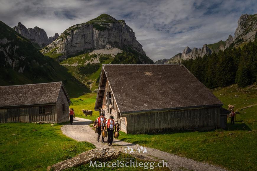 Öberefahre, Alpfahrt, Alpaufzug, Appenzell, Alpstein, Marcel Schiegg, Kühe, Ziege, Tracht, Brauchtum, Tradition, Hornkuh