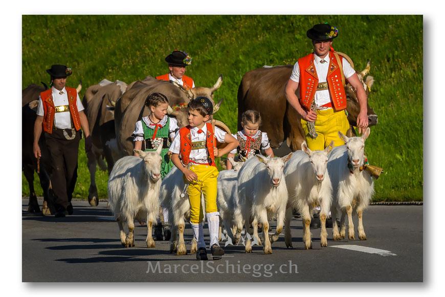 Alpstein, Brauchtum, Tradition, Alpfahrt, Marcel Schiegg, Ziegen, Braunvieh, Hornkühe, Alpstein, Appenzell, Appenzellerland, Schweiz, Ostschweiz, Tracht, Alpaufzug