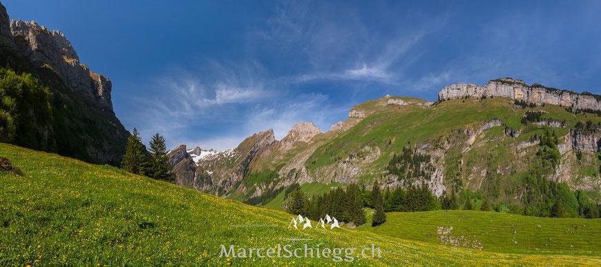 Seealpsee. Panorama, Alpstein, Säntis, Schäfler, Ebenanlp, Appenzell, Appenzellerland, Marcel Schiegg, Blumenwiese, Frühling