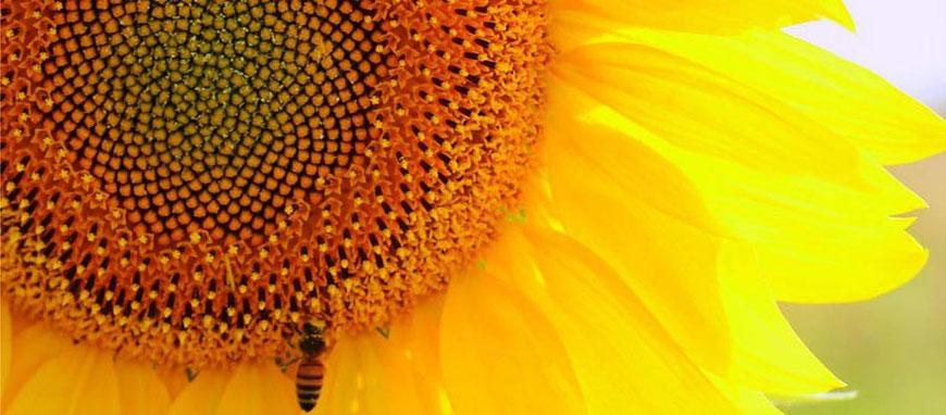 Benessere bio, vasta selezione di prodotti naturali presso L'Altea erboristeria a Roma