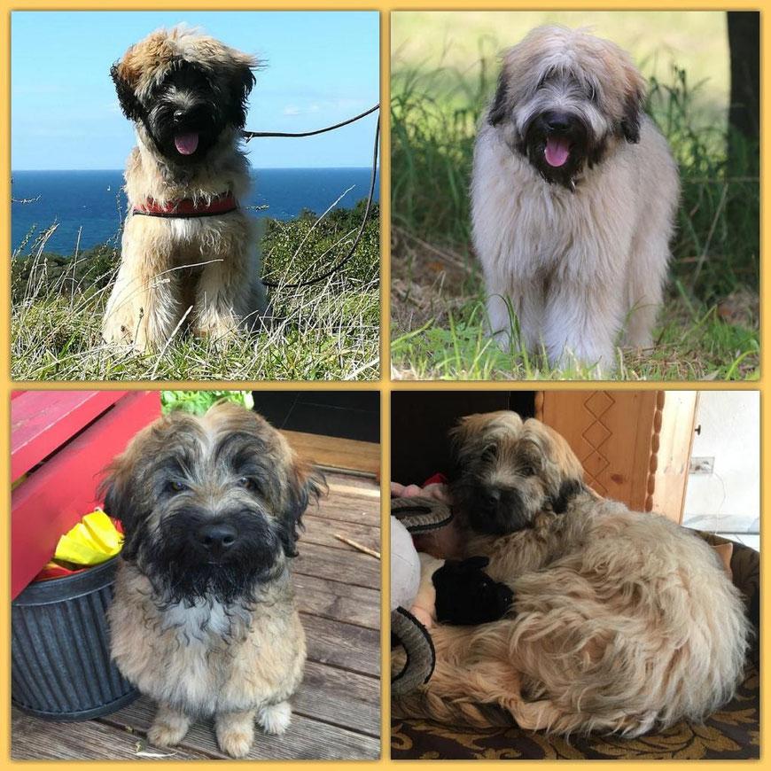 oben: Gooly-Goomba und Gubacca, unten: Gustav und Greta *Emmie* - ein halbes Jahr alt