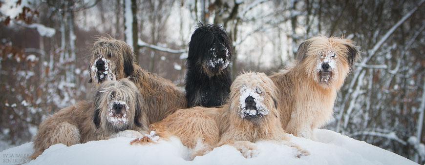 Die Schneenasen: Benni, Aila, Lili, Otti und Ida