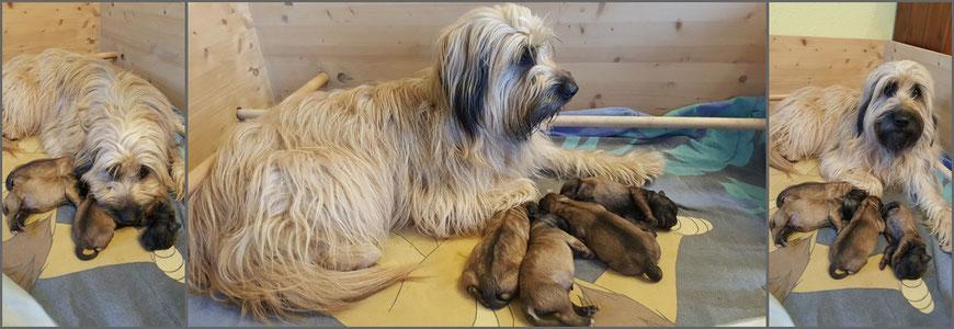 Die stolze Mama mit ihren Vierlingen (1 Tag alt)