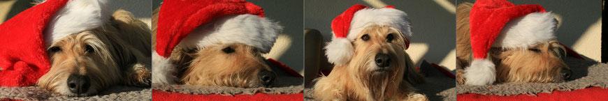 Ida, unser süßer Wichtel, bereitet sich schon auf Weihnachten vor