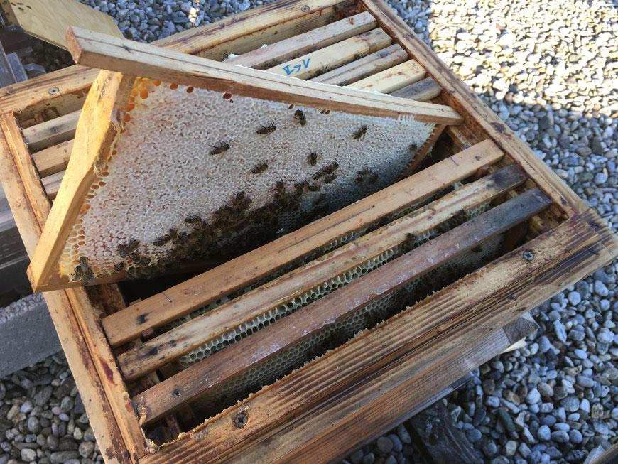 Bio-Honig aus der Steiermark in der Wabe