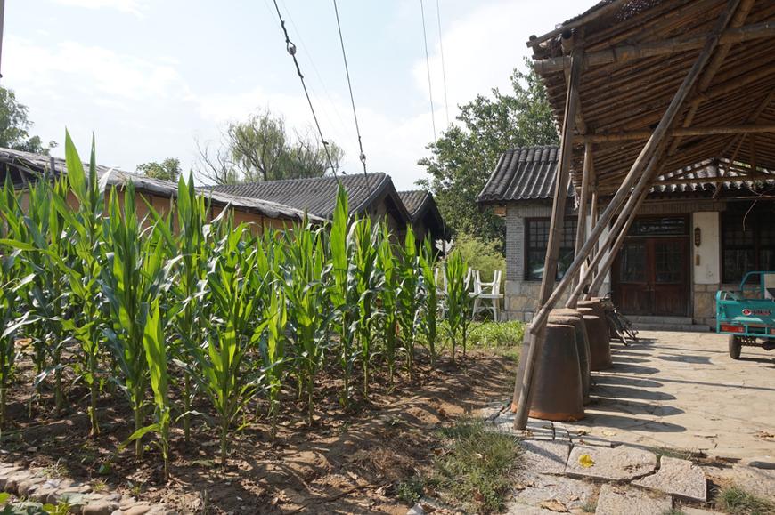 Du maïs est planté au milieu de maisons traditionnelles chinoises reconstituées où les visiteurs peuvent séjourner.