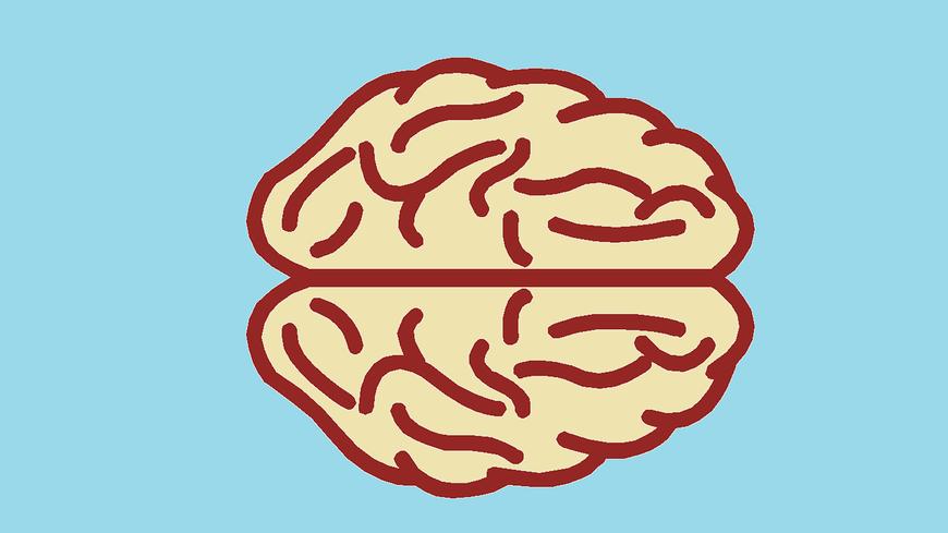 Grafische Darstellung Gehirn