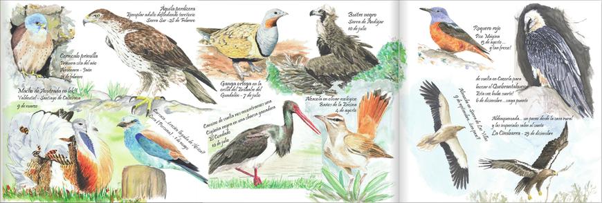 guía ornitologica jaén Diputación de Jaén ilustraciones Diego Ortega Alonso Iberus Medio Ambiente