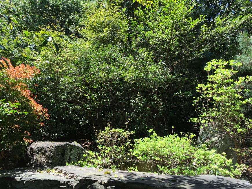森美華 大阪 堀江のヒーリング サロン・瞑想気功・スピリチュアル セッション・難波・心斎橋・占い・浄霊・トラウマ