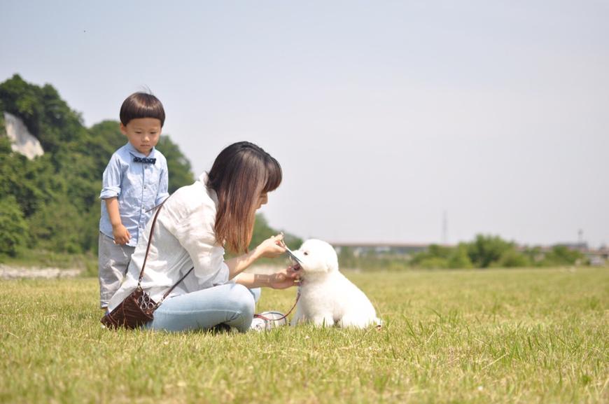 鶴来 プードルやチワワダックスなどの小型犬専門 個人サロン