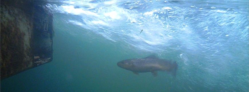 Danica Dudes Fliegenfischen Blog