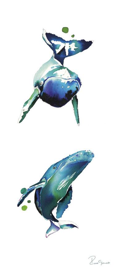 Jorobadas azules
